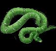 Boa constrictor ##STADE## - mantello 5